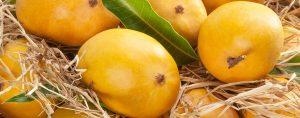 cargo-Mango
